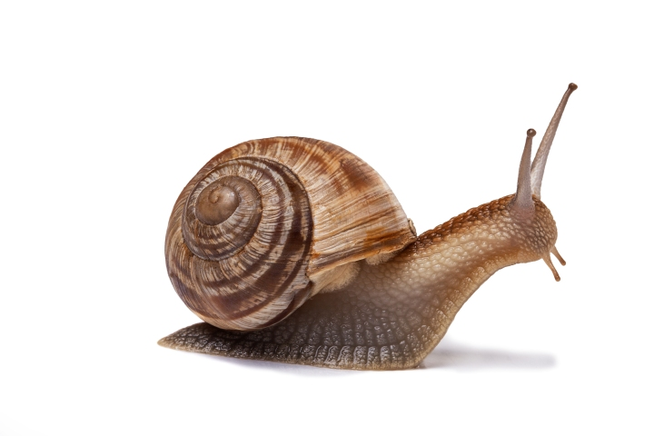 bt1510_snail